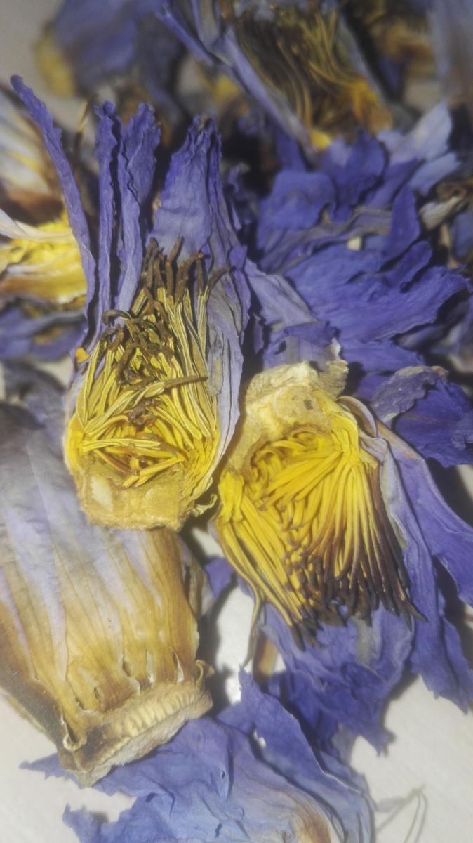 Lotus bleu , pétales Nymphaea caerulea fleur entière