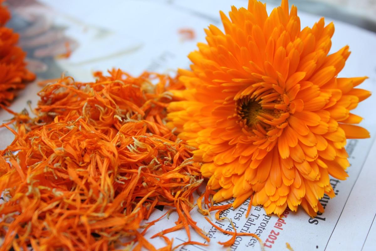 Achetez des fleurs seches de calendula officnalis
