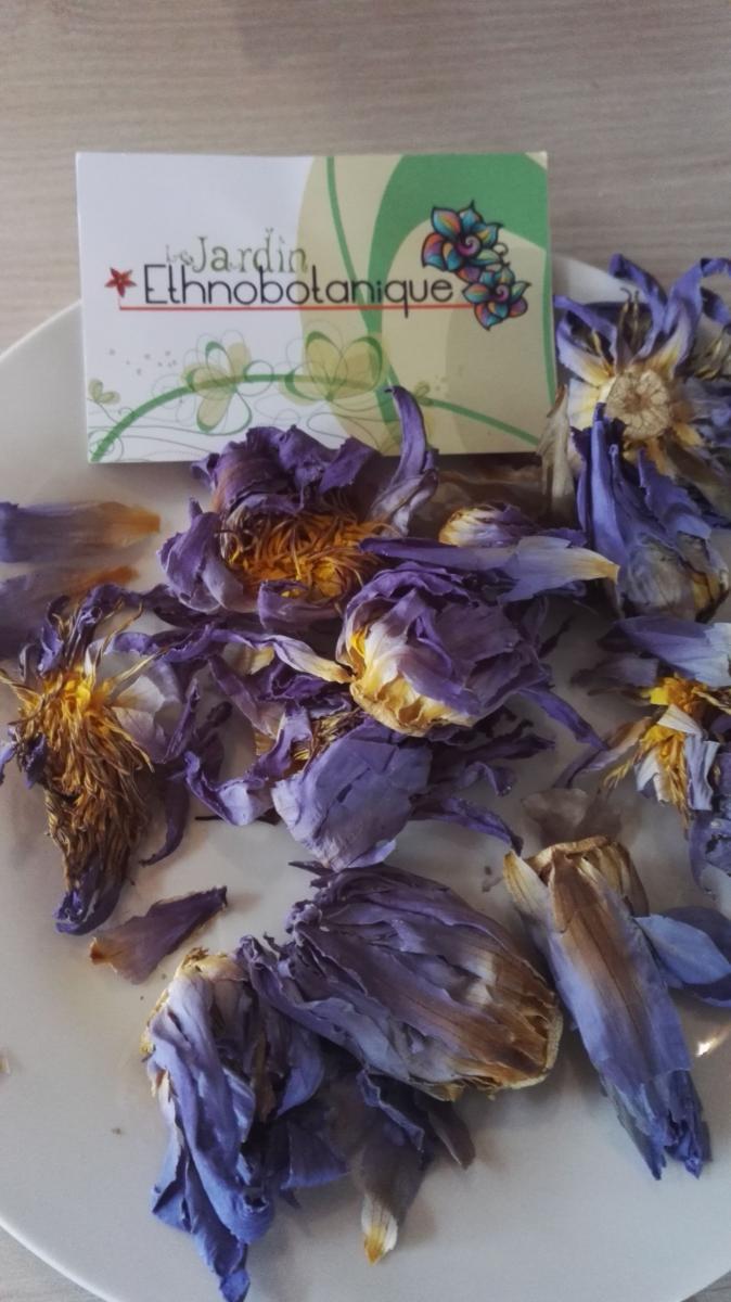 Lotus Bleu Fleurs Entieres Seches Vente Nymphaea Caerulea